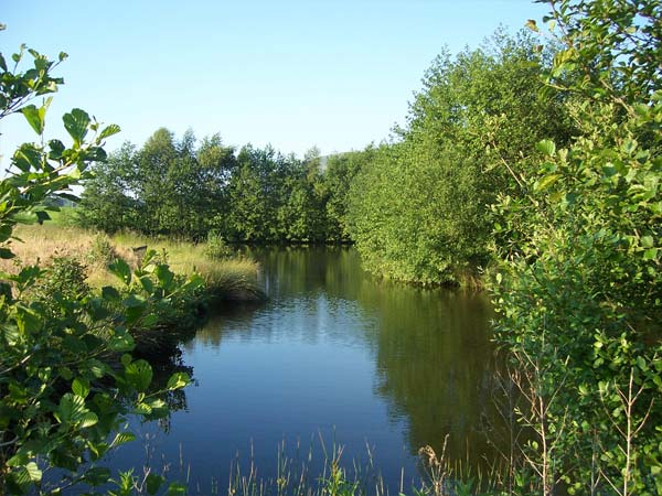 Our Private Lake In Summer | Glan Clwyd Isa