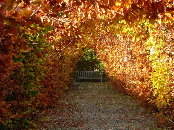 Autumnul Topiary Tunnel | Glan Clwyd Isa